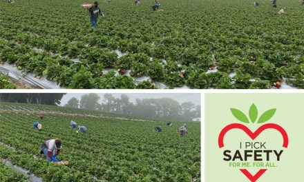 California Strawberry Growers and Farm Workers Pick Safety